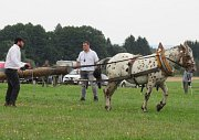 Ovladatelnost v kládě prověřila dovednosti koní jako při práci v lese.