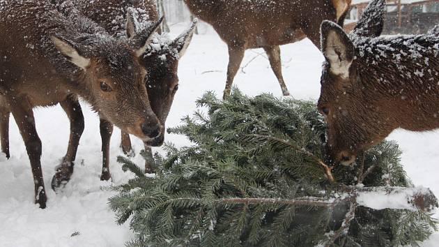 Zvířata v táborské zoo čekalo netradiční zpestření jídelníčku.