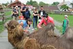 Velbloudi uchvátili Žanetu Krátoškovou při prvním setkání, na farmě seznamuje jak s jednohrbými, tak dvojhrbými přežvýkavci. Chovatel lam Jiří Švanda představuje zase hravé dlouhokrké sudokopytníky.