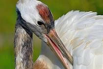 V sobotu 29. února a v neděli 1. března se koná od 15 hodin komentované krmení vzácných ptáků.