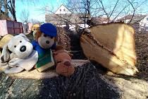 V pondělí byly poraženy čtyři lípy na Promenádě v Soběslavi.