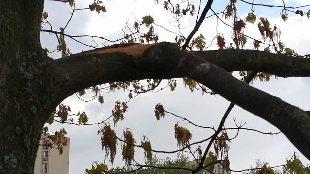Nevěšte se za větve, lámou se, jsou živé. Ulomená větev může strom vážně poškodit.