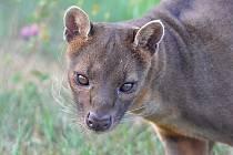 Víte, kterou hvězdu animovaného filmu Madagaskar najdete v táborské zoologické zahradě?