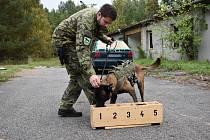 Bechyňským pyrotechnikům pomáhají s vyhledáváním výbušnin i psi.