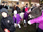 U zvířátek se vytvořil dav dětí.