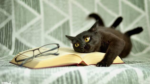 Černý kocour Edgar shání páníčka