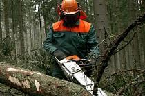 Dělníci těžící dřevo patří mezi profesní skupiny, které jsou nejvíc ohroženy pracovními úrazy. Při likvidaci polomů po lednovém orkánu Kyrill zemřeli v šumavských lesích dva slovenští dělníci.