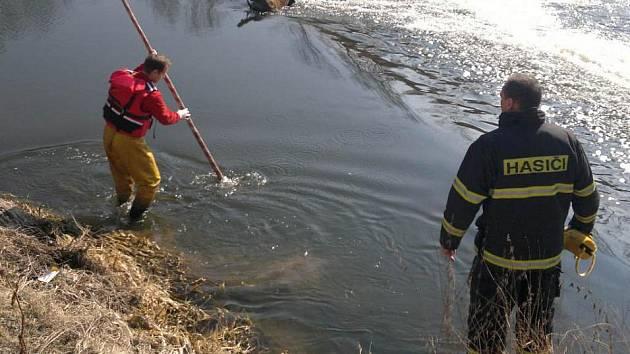 Mrtvého divočáka přijeli z řeky vytáhnout hasiči.