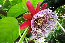 Krásy skleníku botanické zahrady