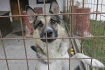 Ilustrační foto. Pes čeká v útulku na nového majitele