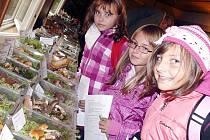 NA VÝSTAVĚ. Kolem tří set druhů hub včera obdivovaly Kristýna Dosedělová, Kristýna Behůnová a Valerie Žáková ze čtvrté třídy ZŠ Zborovská, Tábor.