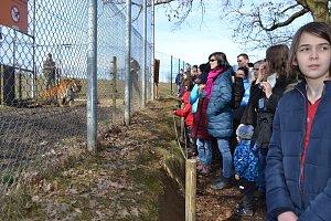 Tygr Rocky oslavil v táborské ZOO sedmé narozeniny