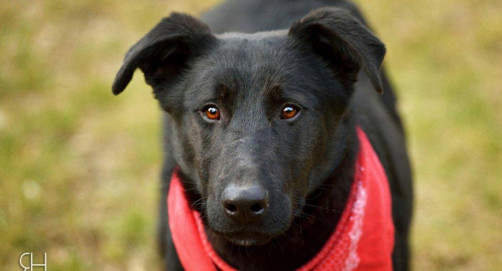 Tristan – Klidný přemýšlivý pan pes.