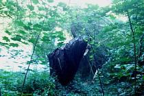 Padlý strom.
