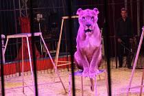 Cirkus Carini.