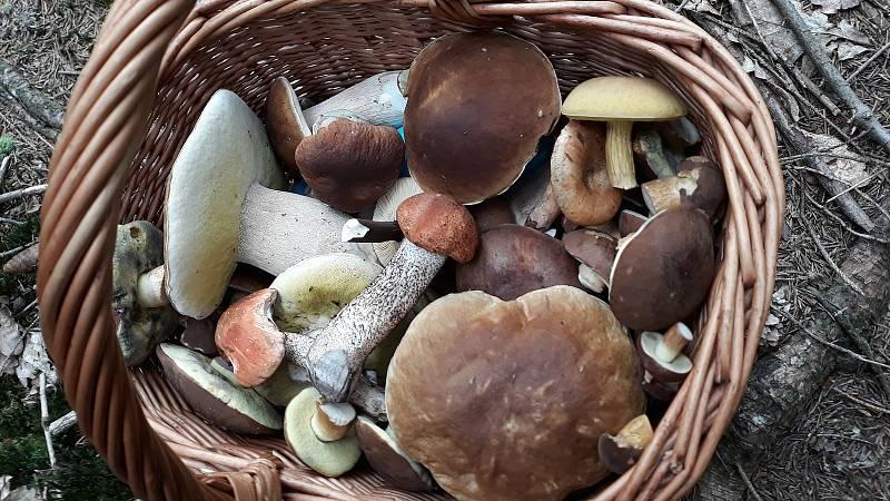 Ilustrační foto houby.