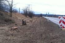 VYKÁCENÝ PÁS. Ředitelství silnic a dálnic nechalo pokácet 350 stromů na pětikilometrovém úseku u Veselí nad Lužnicí kvůli stavbě dálnice z Veselí nad Lužnicí do Bošilce.