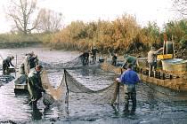 V rybníku Dolejší v Chlebově chovají Soběslavští zejména candáty a kapry.