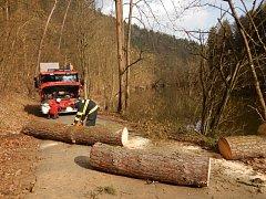 Vyvrácená borovice blokovala v Táboře místní komunikaci. Odstranili ji hasiči.