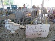 V Soběslavi se v neděli sešli zahrádkáři a chovatelé.