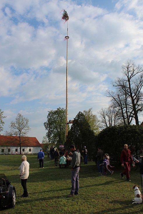 Májku stavěli v obci Mažice na Táborsku.