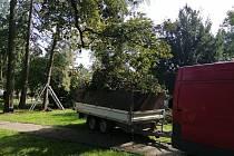 Ošetřování dřevin v Táboře.