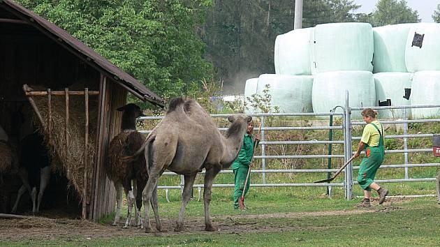 Zoo Tábor Větrovy.