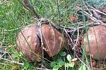 Úlovek ze soboty 6. června z choustnických lesů.