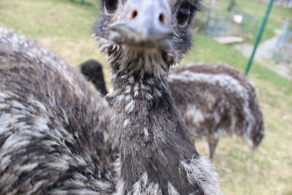 Zoo na jihu Čech otevřou brány návštěvníkům, připravuje se i táborská zoologická zahrada.