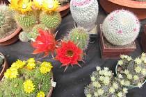 Hned tři výstavy nejen barevné flóry, ale i fauny hostí o víkendu Botanická zahrada Tábor.