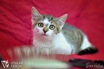 Kočička Nellie hledá nového páníčka