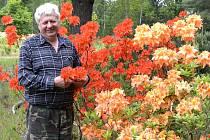 Fascinující zahradu Vladimíra Němce (na snímku) najdete v Mažicích na Soběslavsku, hned vedle Blatské stezky. Koupit si u něj můžete rododendrony, azalky i kanadské borůvky, jejichž kvalita pramení z mikroklimatu zdejších Borkovických blat.