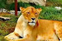 Návštěva Zoologické zahrady v Táboře.