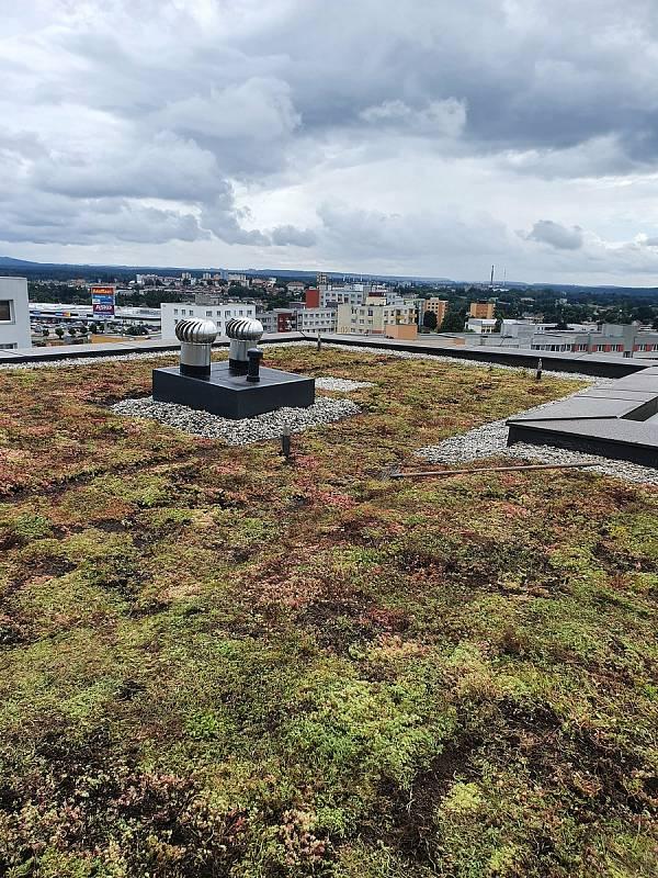 Na pilotní projekt zelené střechy v Táboře mají navazovat v budoucnu další. Rozchodníky na třináctipatrovém domě v Berlínské ulici zajistí termoregulační vlastnosti i prodloužení životnosti.