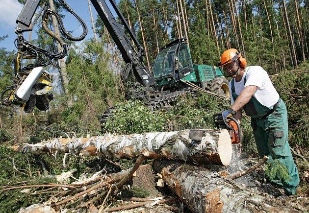 Těžba dřeva. Ilustrační foto.