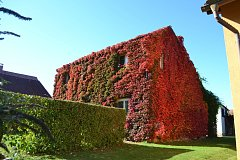 Každý podzim hraje dům rodiny Slabých plejádou barev.