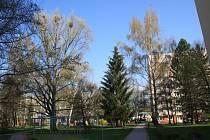 Havrani obsadili Pražské sídliště v Táboře