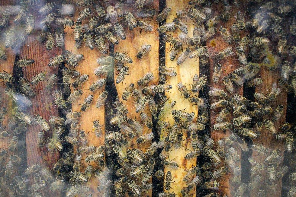 Včely. Ilustrační foto.