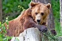 Návštěvníci ZOO Tábor poznají noční život divokých zvířat.