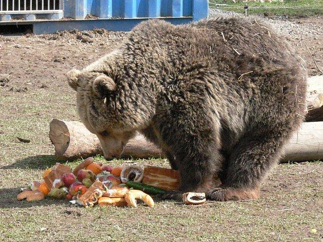 Medvěd ze Zoo Větrovy.
