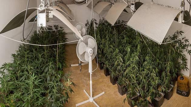 Táborští kriminalisté odhalili ve svém teritoriu indoorovou pěstírnu konopí.