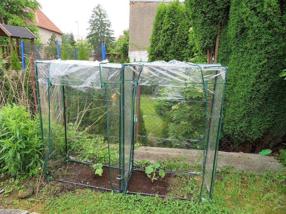 Tomáš Hořický si založil i vlastní zahrádku, kde už nyní pěstuje různé bylinky a těší se na čerstvou zeleninu. Na snímku se šéfkuchařem Janem Horkým.