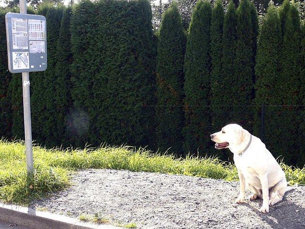 Na konečné MHD číslo 60 a 61 čekala na spoj, který zajíždí do nové čtvrti,  i labradorka Barča.