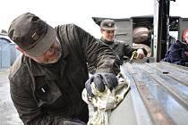 Příslušníci Aktivní zálohy Záchranné roty 151. a 153. ženijního praporu při přípravě techniky na zimní období, tzv. přechodech