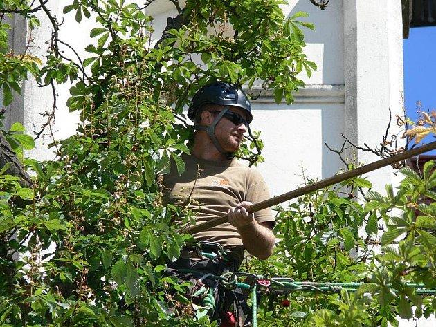Odborníci v rámci programu Zdravé stromy prořezali jeden ze dvou jírovců u kostela na Žižkově náměstí.