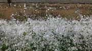 Předpovědi meteorologů se začínají naplňovat. Tak to vypadalo v Dražicích u Tábora v úterý 6. června odpoledne.