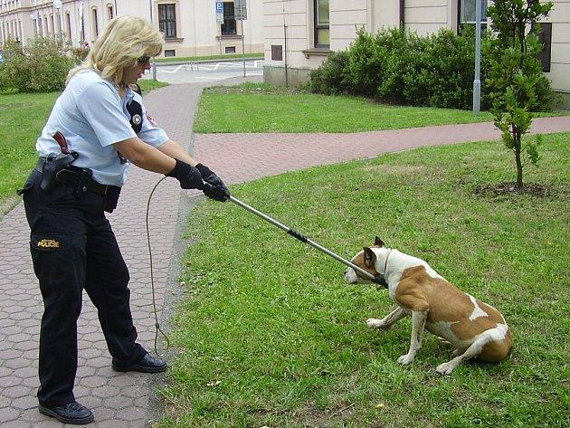 Odchyt psa