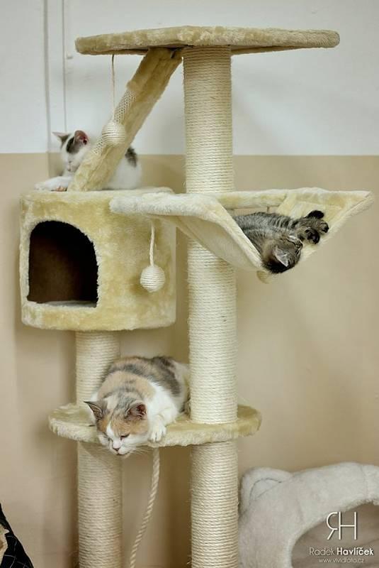 Útulek Tábor pro psy a kočky. Kotce pro zdravé a naočkované kočky jsou vybaveny škrabadly, pelíšky a průlezkami, kočky mají k dispozici i hernu či fotokoutek.