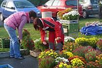 Ilustrační foto. Prodejní výstava květin v Chotovinách