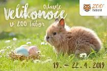 Od pátku 19. do pondělí 22. dubna ovládne velikonoční nálada i Zoo Tábor.